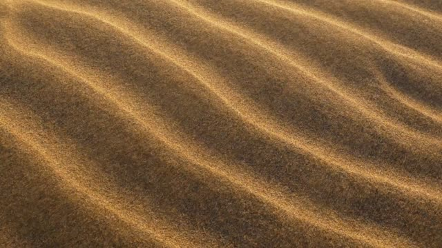 Goldish sand grains waving in the wind in a desert. Slow motion shot
