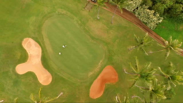 Golfers on Putting Green Tropical Golf Course Palm Trees video