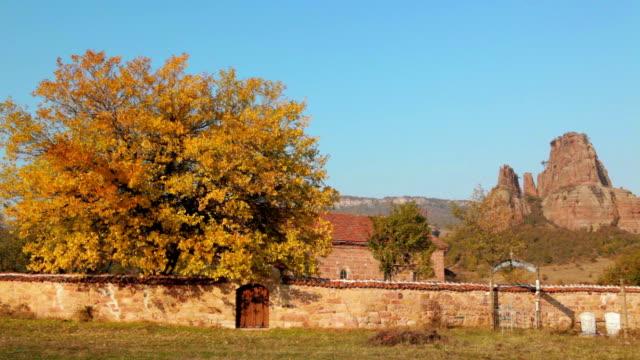 Gorgeous autumn walnut-tree video