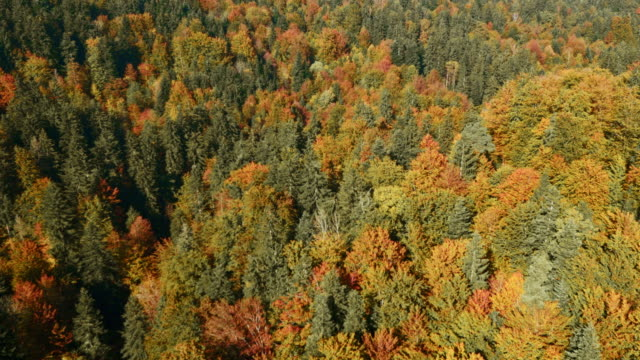 AERIAL Gorgeous forest on a sunny day in fall video