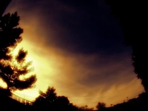 meraviglioso tramonto  - pinacee video stock e b–roll