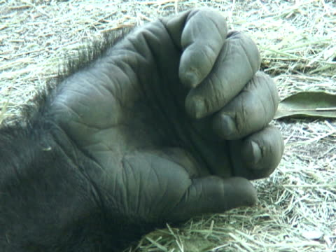 Gorilla Hand and Fingers video