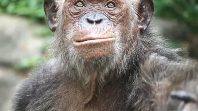gorilla video