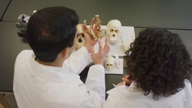 stockvideo's en b-roll-footage met afgestudeerde studenten studeren botten - dierlijk bot