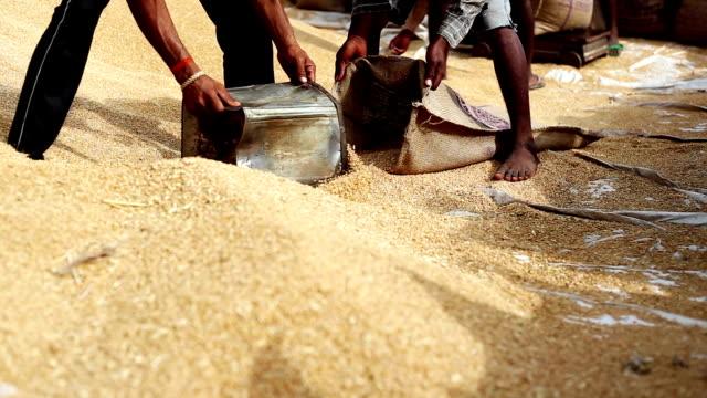 vidéos et rushes de marché des céréales - marché établissement commercial