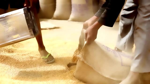 Grain market Wheat grain crop heap open in the market after wheat harvesting during summer season. haryana stock videos & royalty-free footage