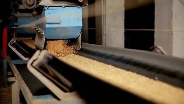 Grain moves along the conveyor belt video