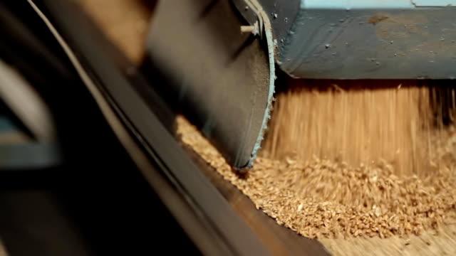 grain moves along the conveyor belt - завод по переработке пищевых продуктов стоковые видео и кадры b-roll