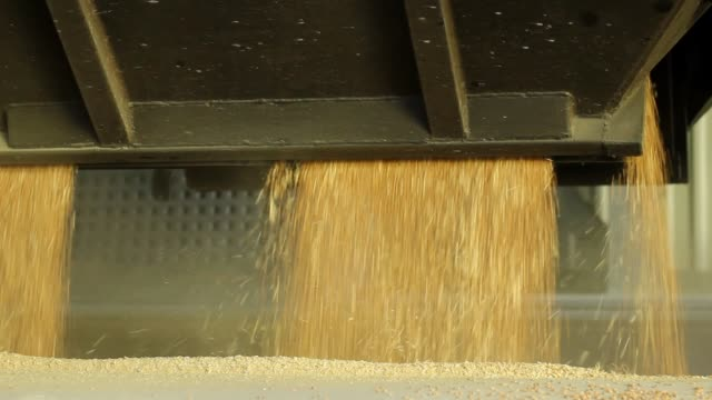 grain reception from a freight car on a railway at an elevator, grain runs in a beautiful flow, close-up