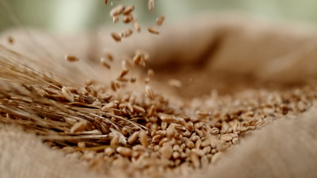 slo mo grains falling into sack of wheat crop - orzo video stock e b–roll