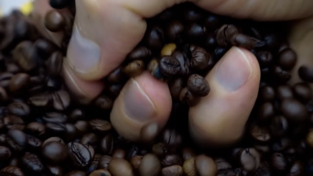 Grains of coffee fall on other grains of coffee. The hand takes a coffee grains video