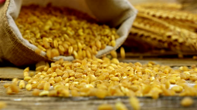 Grains of golden wheat in a sack spilling on the old wooden background Grains of golden wheat in a sack spilling on the old wooden background rye grain stock videos & royalty-free footage