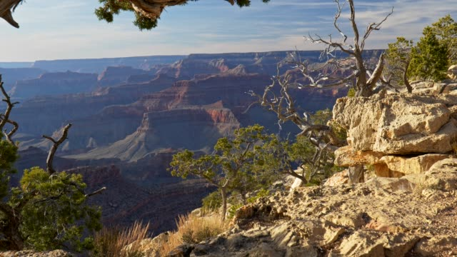 Grand Canyon, United States. Coming to the edge of cliff to watch picturesque view of rocks to the very horizon. Evergreen trees on dry soil. UHD