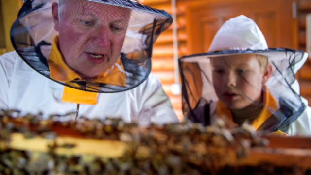 Granddad teaching the grandson about the bees