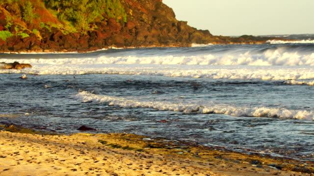 Grande Anse Beach, waves on sunset - Reunion Island video