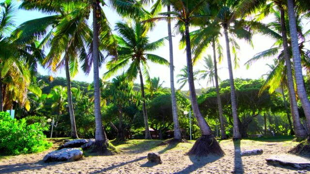Grande Anse palm trees on morning - Reunion Island video