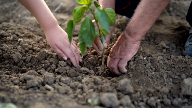 grandfather and grandson hands holding new growth plant - paprica video stock e b–roll