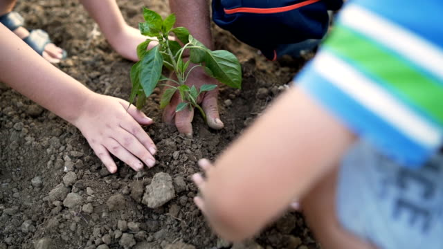 Grandfather and grandson hands holding new growth plant Grandfather and grandson hands holding new growth plant vegetable garden stock videos & royalty-free footage
