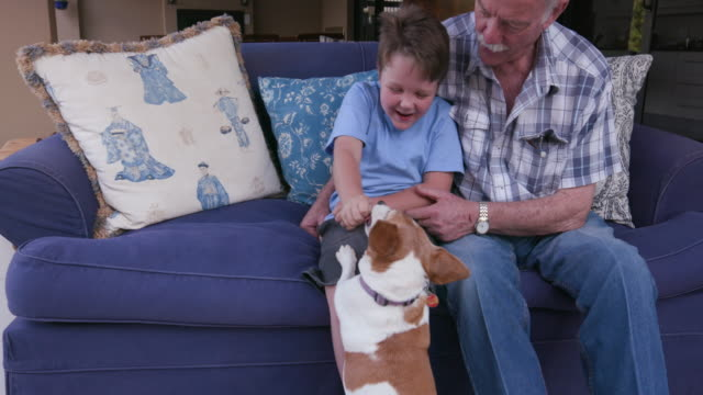 Grandfather and grandson having fun with a small dog sitting on a couch video