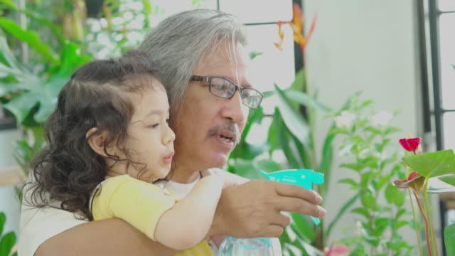 nonno che insegna al bambino la biologia, la coltivazione di piante a casa, il concetto di homeschooling - gardening video stock e b–roll