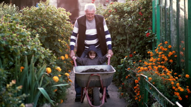 Grandfather with grand son working in the garden riding the wheelbarrow. Old man helping little boy outdoor. 4K video