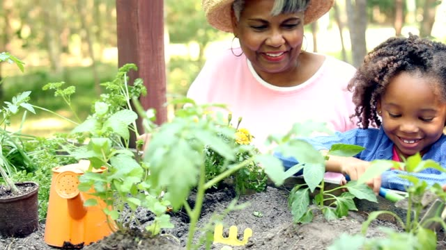 Grandmother and children gardening outdoors in spring. African descent grandmother and grandchild gardening in outdoor vegetable garden in spring or summer season.  Cute little girl enjoys planting new flowers and vegetable plants. horticulture stock videos & royalty-free footage