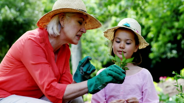 Grandmother and granddaughter gardening in the park Grandmother and granddaughter gardening in the park on a sunny day horticulture stock videos & royalty-free footage