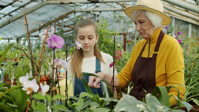 Grandmother and granddaughter spraying water on orchid flowers discussing floristry