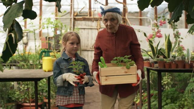 grandmother and granddaughter walking through greenhouse - nonna e nipote camminare video stock e b–roll