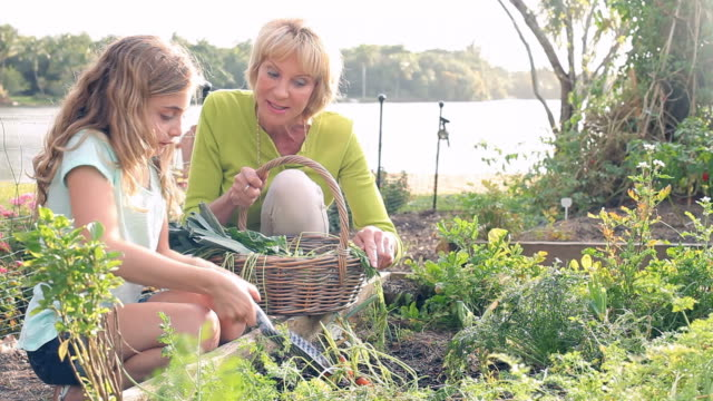 Grandmother And Granddaughter Working On Allotment Grandmother and granddaughter digging up carrots from vegetable garden.Shot on Canon 5D MkII at frame rate of 25fps ornamental garden stock videos & royalty-free footage