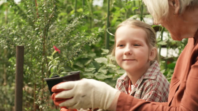 Bидео Grandmother Showing Seedlings to Granddaughter in Garden