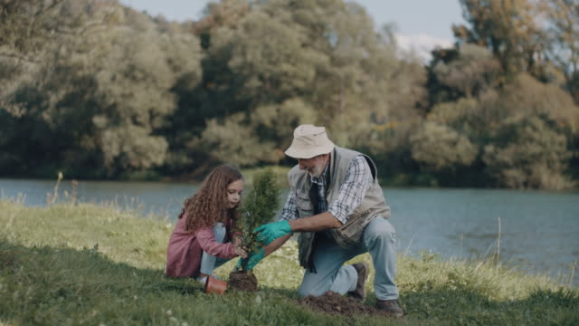 Grandpa and little girl planting a tree video