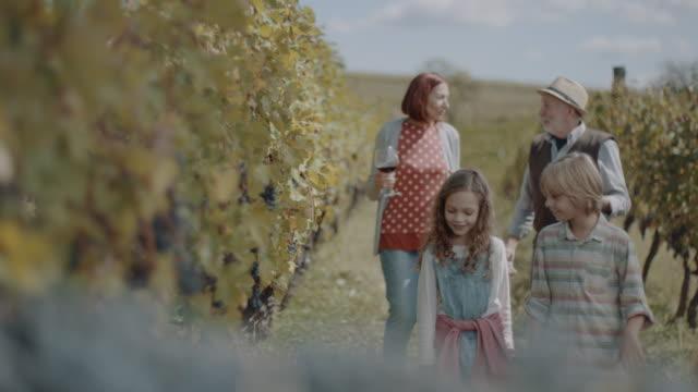 vídeos de stock e filmes b-roll de grandparent's with granddaughter and grandson in vineyard - uva shiraz