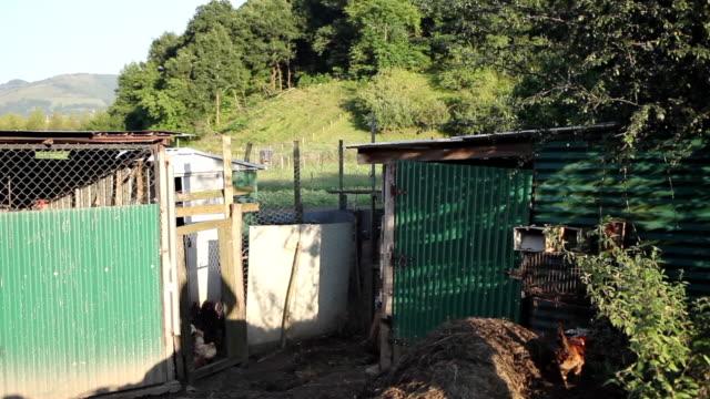 granja rural  con edificaciones de madera y techo de uralita, con heno y gallinas alrededor bajo cielo azul y arboles al fondo video
