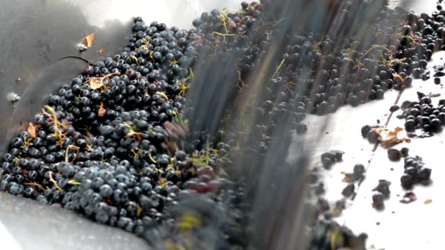 Grape crusher video