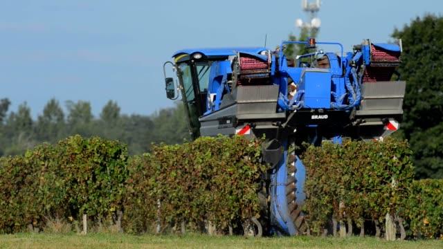 Grape Harvest Machine - Bordeaux Vineyard video