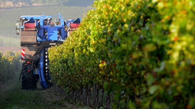 Grape Harvest Machine video