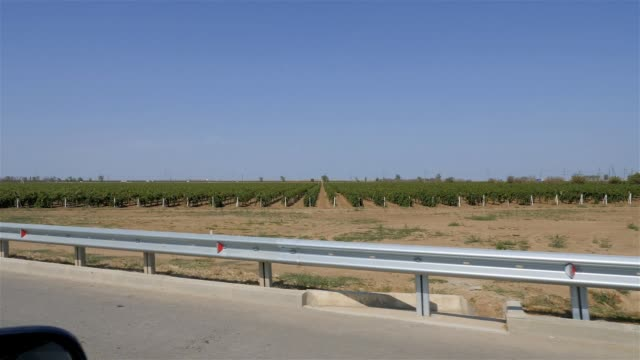 grape plantation taken out of the car. road metal fence located on the edge of the road - parapetto barriera video stock e b–roll