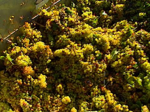 grapes auger video
