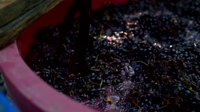 Grapes fruits home wine processing thorough crushing of fruit with bare hands