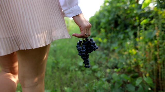 grapes in my hand - azienda vinivola video stock e b–roll