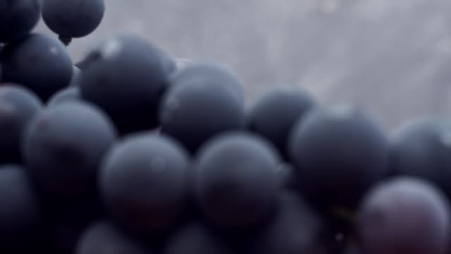 grapes on a red wooden table and dark-blue background. close up macro view. - uva video stock e b–roll