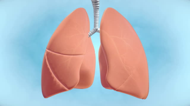 Graphic Visualisation of Healthy Human Lungs - 4K Resolution