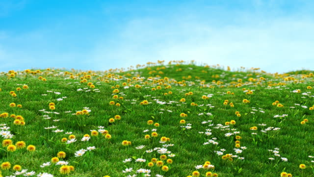 Grass and flowers growing magically on a barren meadow