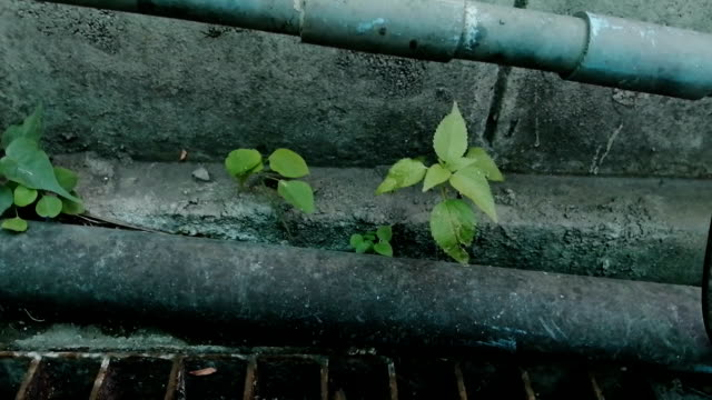 Grass and ivy on dirty floors and walls