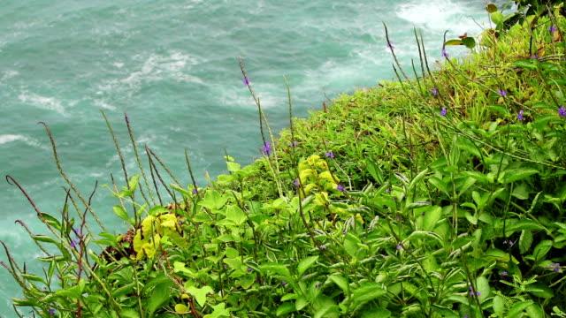 草と海の波 - インドネシア点の映像素材/bロール