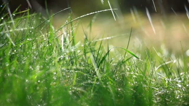 草とレインセレクティブフォーカス - ゴルフ点の映像素材/bロール