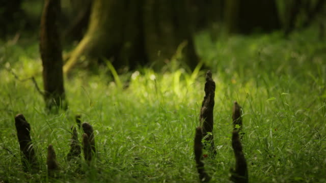 Grass and roots in ray of light video