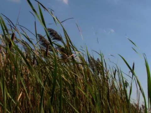 трава и небо 1 - длина стоковые видео и кадры b-roll
