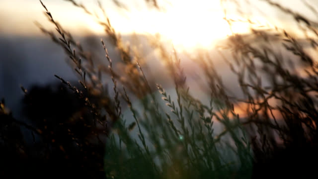 grass at dusk - grass stock videos & royalty-free footage